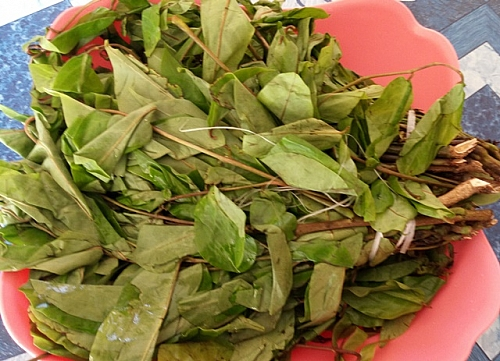 A bunch of oha leaves