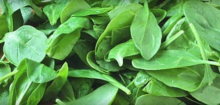Spinach: healthy vegetables with vitamins and minerals needed for metabolism