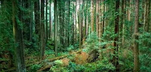 Coniferous forest plants