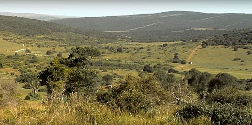 Tropical or savanna grassland plants