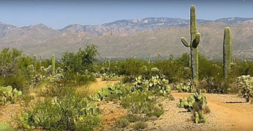 The desert biome plants are not usually tall because of limited rainfall experience in this biome, the dominant plants are shrubs and cactus