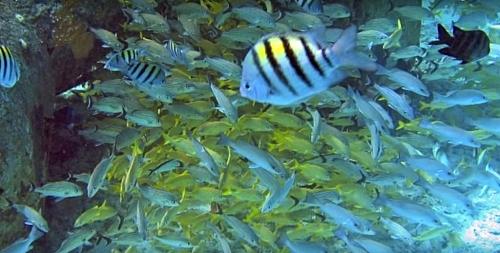 Marine biomes animal species