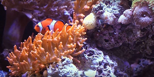 The aquatic ecosystem