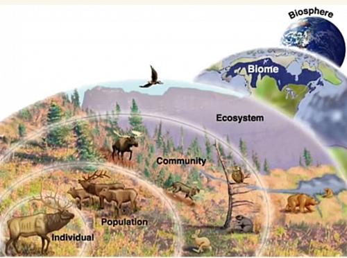 Diagram showing ecological levels of organisation