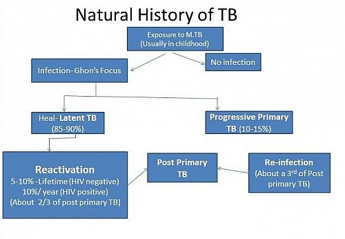 Pulmonary Tuberculosis Pathophysiology