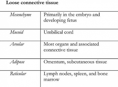 Types of Loose Connective Tissue with their location