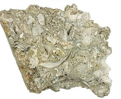 Fossiliferous limestone is type of organic sedimentary rock with abundance of fossil traces
