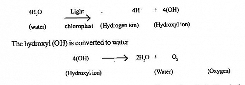 Light reaction of photosynthesis