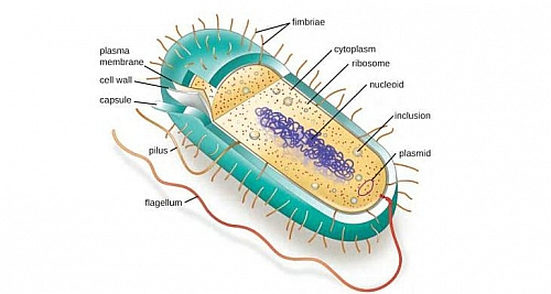 Photo of Prokaryotic cells (Prokaryotes): Definition, Structure, Parts, Examples and Diagram