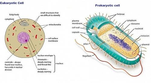 prokaryotes and eukaryotes difference between prokaryotic and