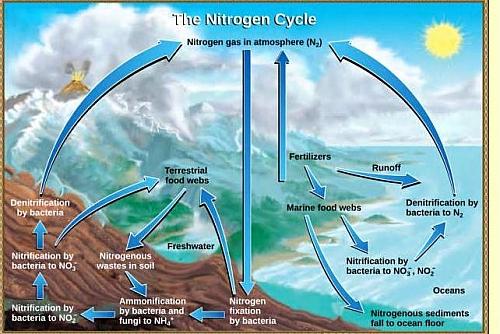 Photo of Nitrogen Cycle Diagram