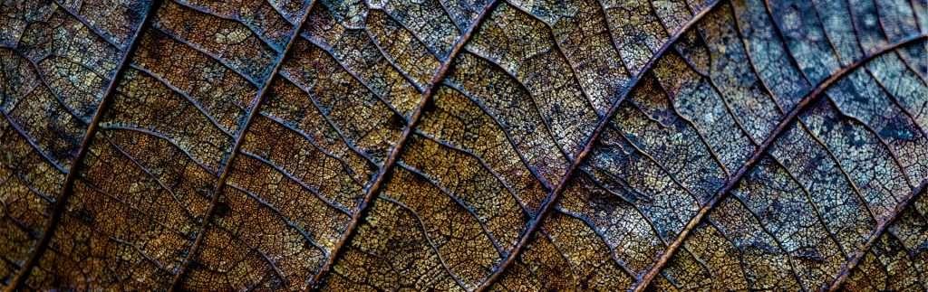 Decomposing leaf in an ecosystem