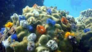 Christmas tree worms and corals in an aquatic ecosystem