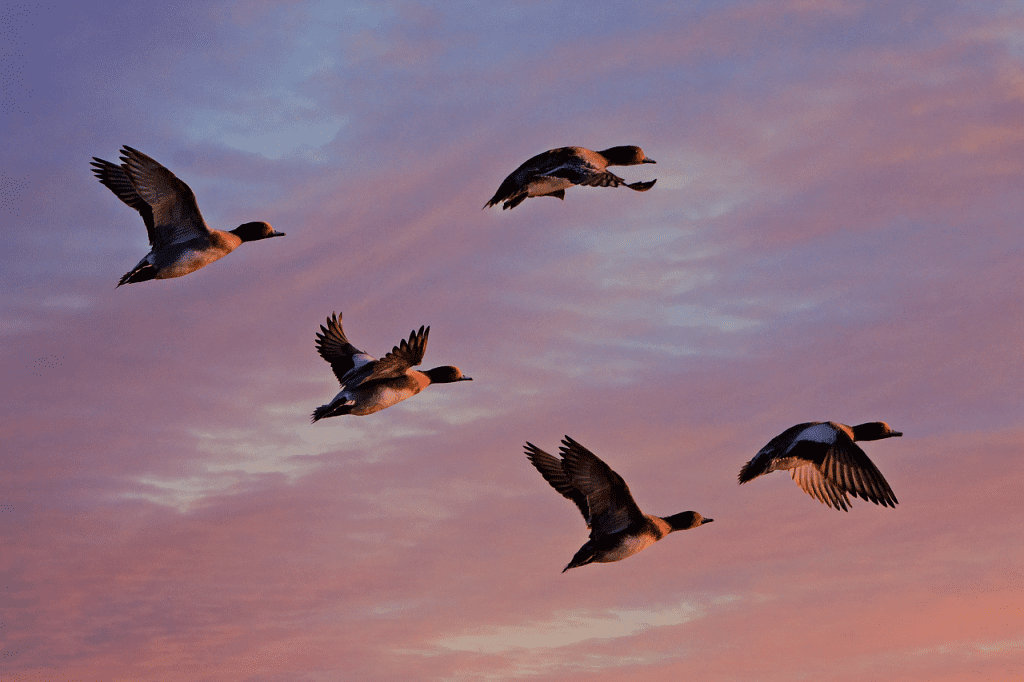 Birds in the air. Birds are typical examples of Ariel animals