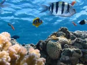 Marine ecosystem showing fish, corals and other biotic & abiotic components