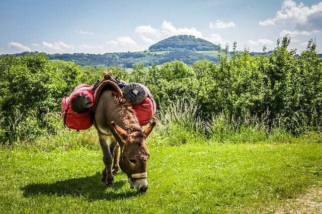 Beast of burden animal: a Donkey carrying some load