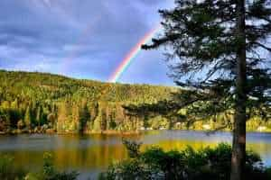 Ecosystem with rainbow in the background