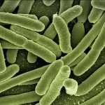 Bacteria is an endoparasite