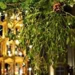 Mistletoe is a parasitic plant
