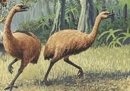 Moa is an extinct flightless bird