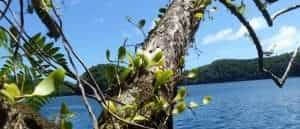 Orchid on tree is another example of commensalism