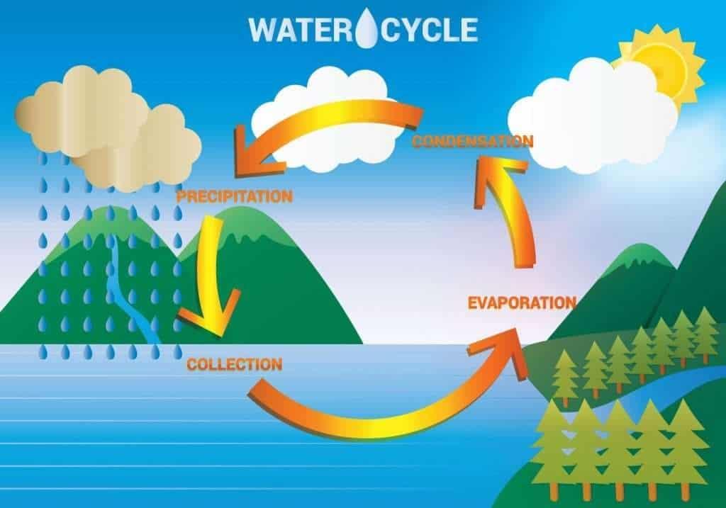 biogeochemical cycle (water cycle))