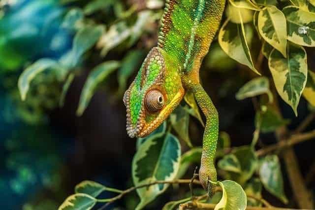 Chameleon Exhibit camouflage